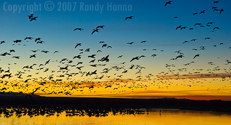 Bosque del Apache National Wildlife Reserve, New Mexico Nikon D2x, ISO 400, 17-55mm @  55mm, 1/60 sec at f5.6