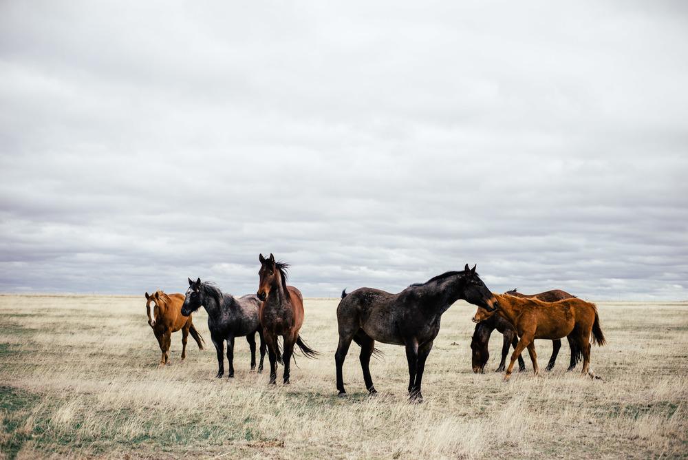 HorsesPlains_.jpg