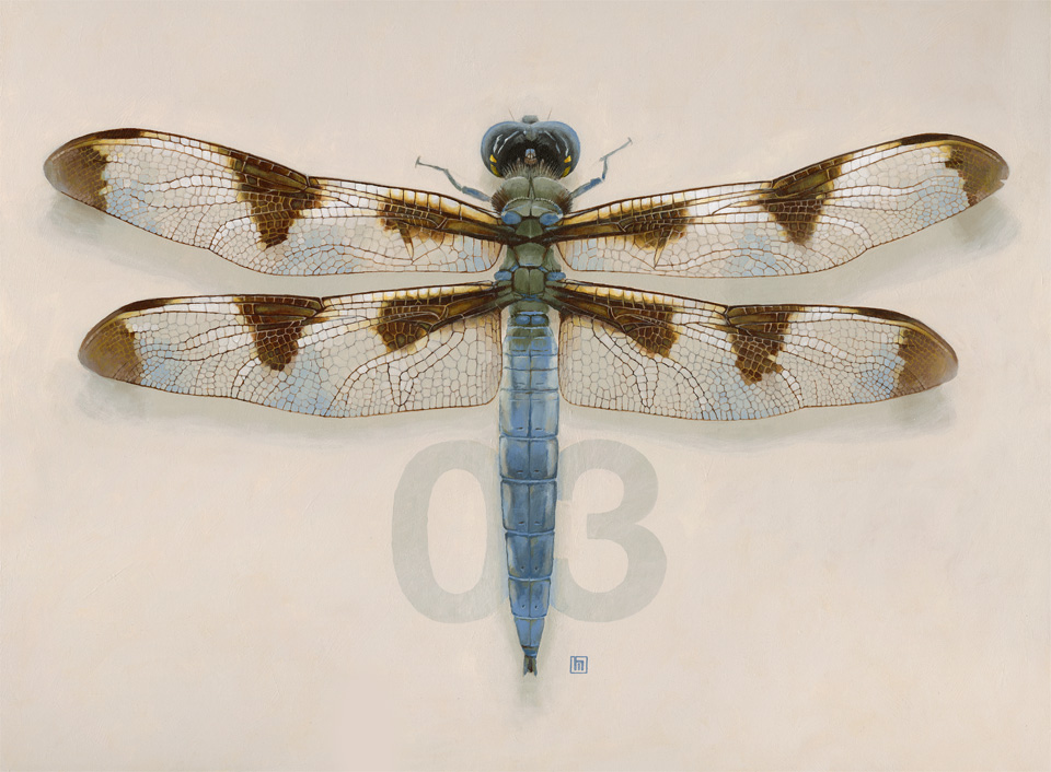 #3 Dragonfly