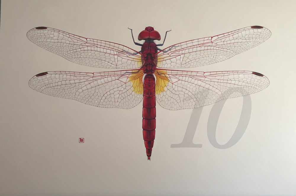 #10 Dragonfly