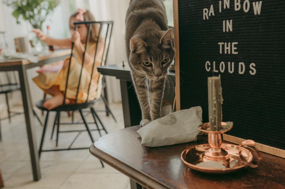 Reno home session cat photo
