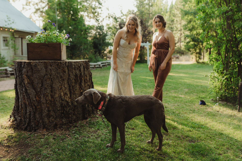 Twenty Mile House wedding dog photo