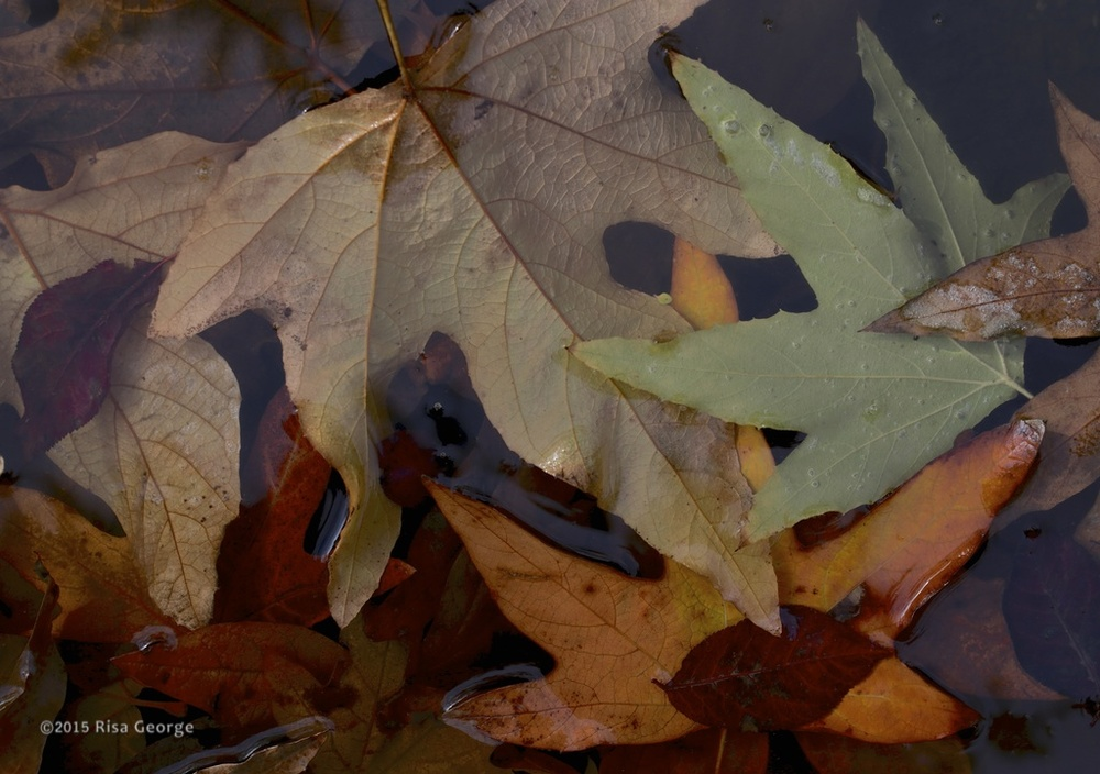 Nature's Abstract - 8