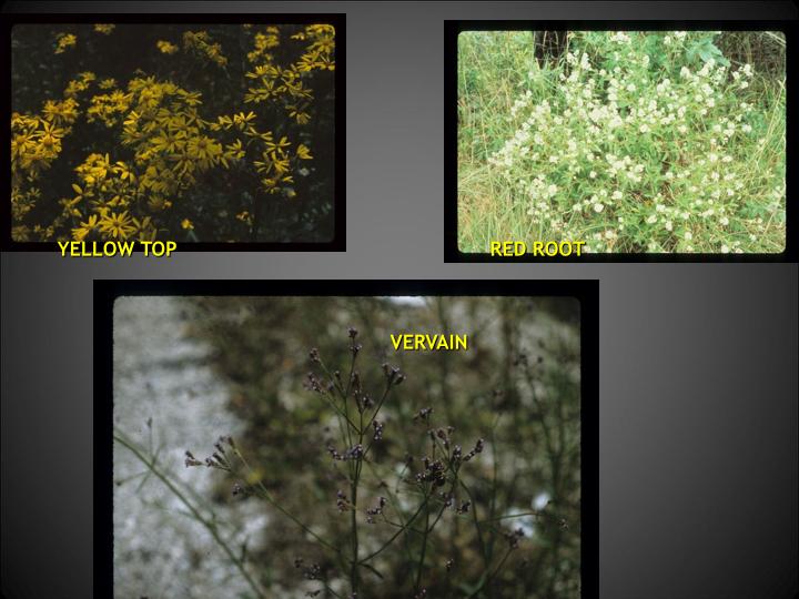 SPRINGFLOWERS 2.016.jpg