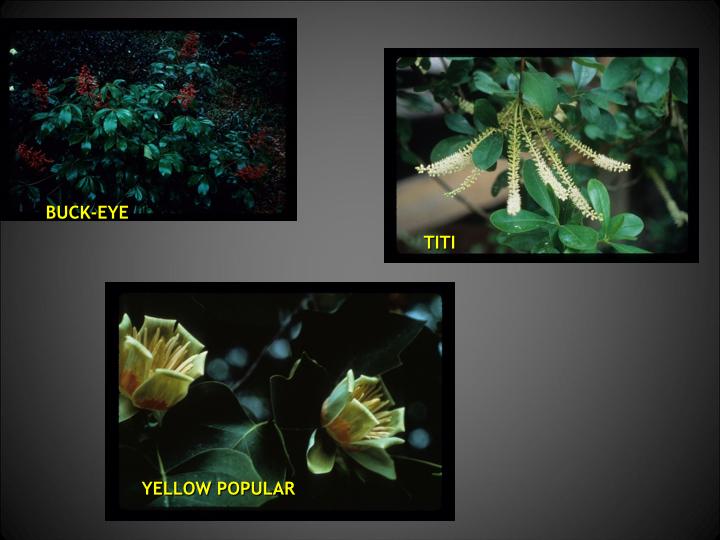 SPRINGFLOWERS 2.017.jpg