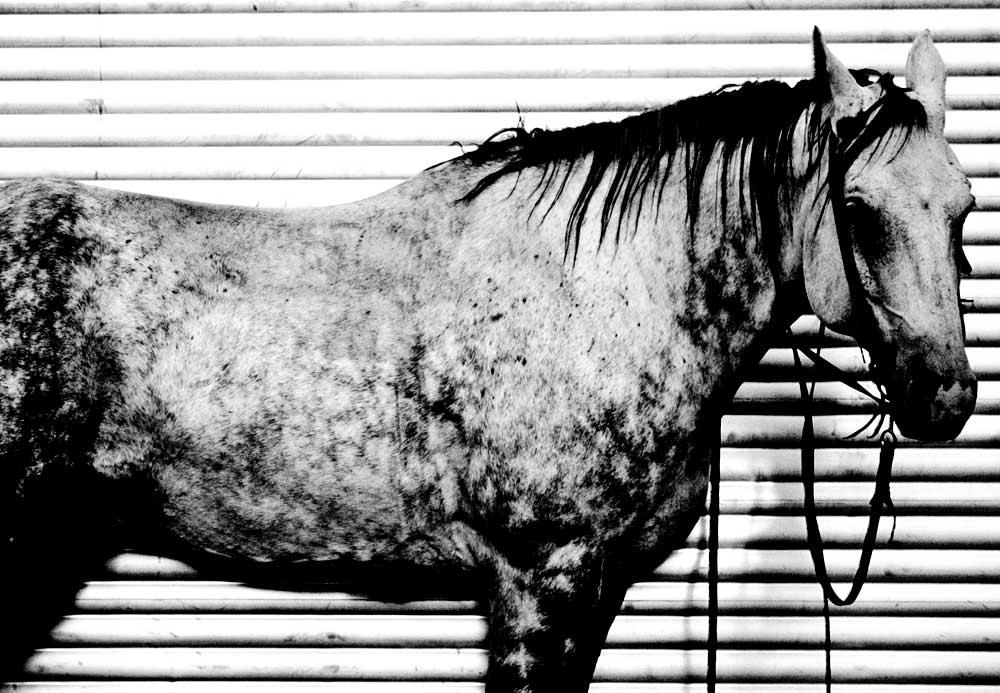 mm.horsetrailer.037Rb.jpg