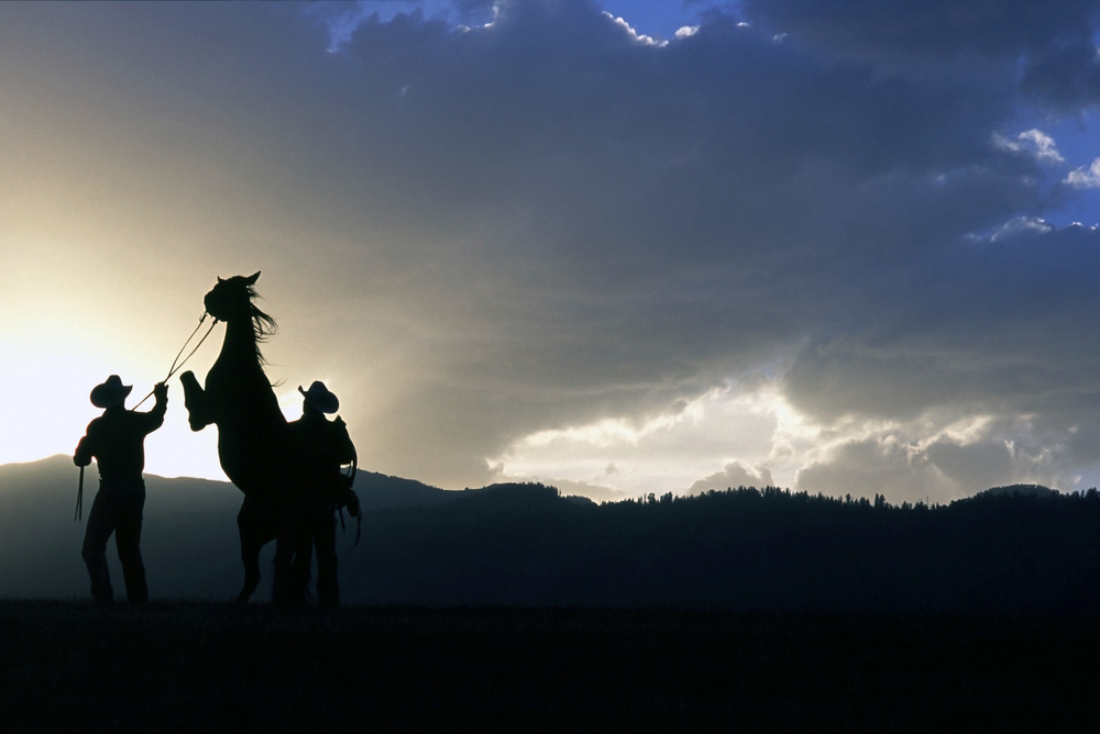 mm.wild-horse-027.jpg