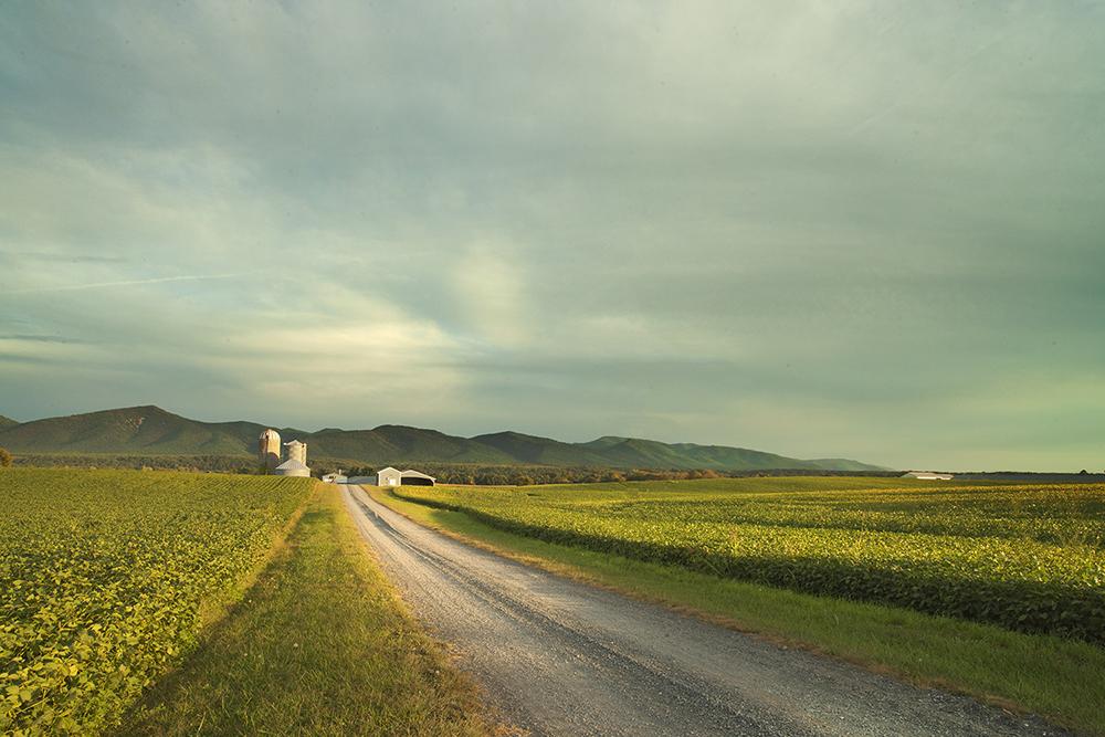 farm-04.jpg