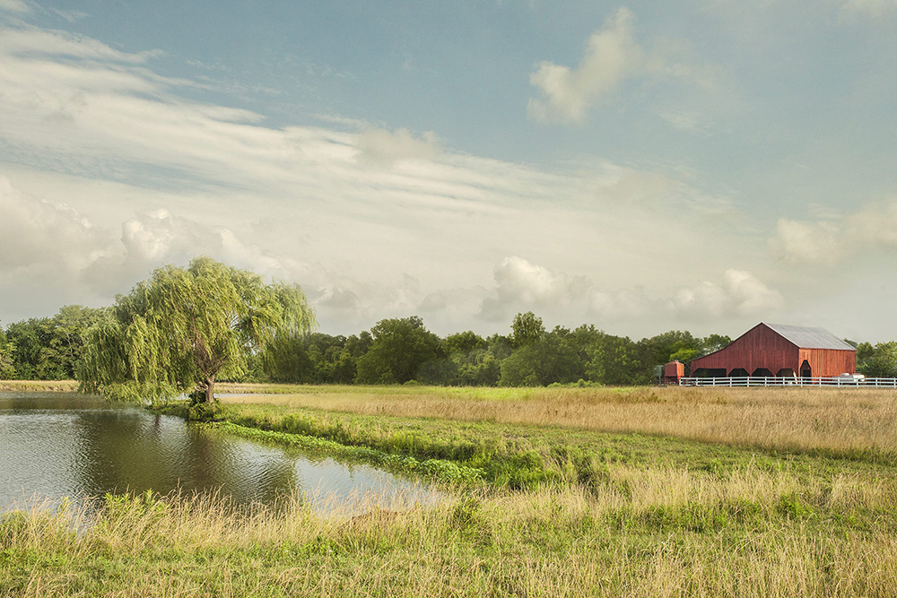 farm-02.jpg