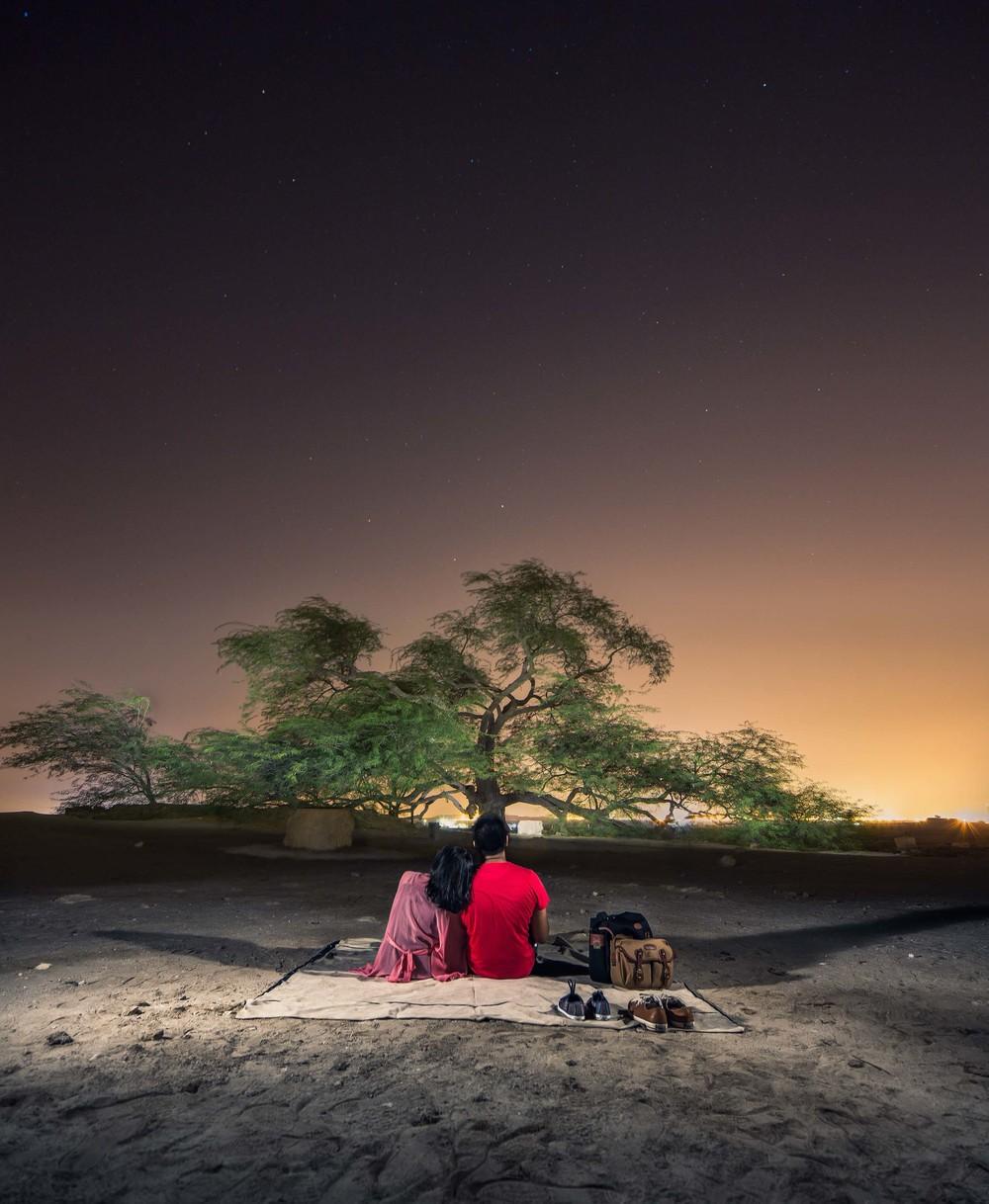 Tree-of-Life-panorama-final-edits.jpg