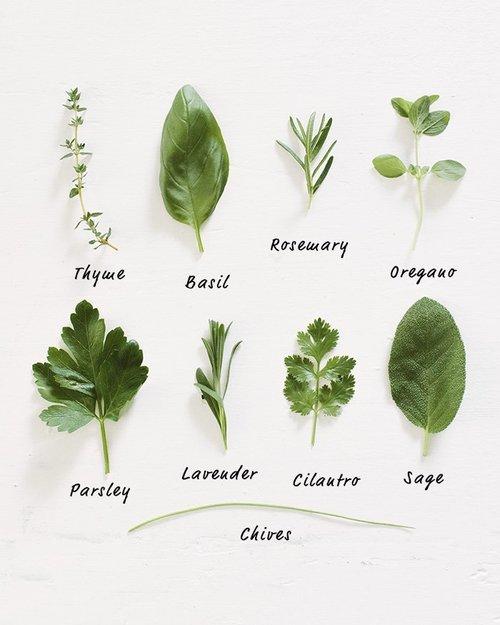 Herb life.