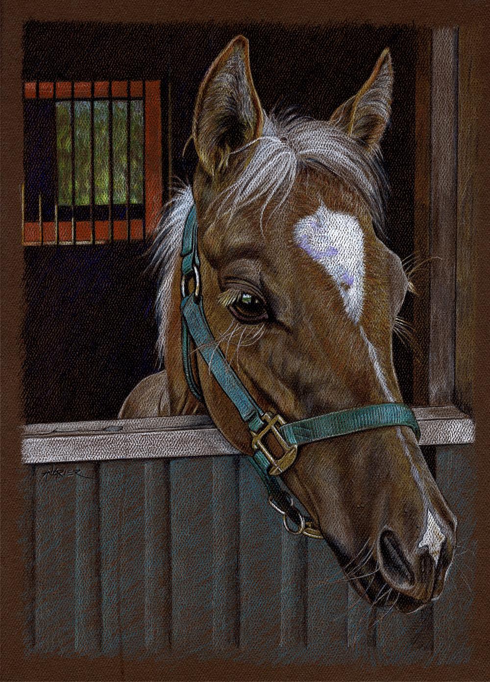 Horse_zpsbeb163d6.JPG