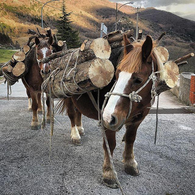 Life in Abruzzo. #realife #realpeople #revolutionfoodmovie #civitadantino #abruzzo #italy #horses