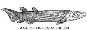 age-of-fishes-museum-9153441.jpg