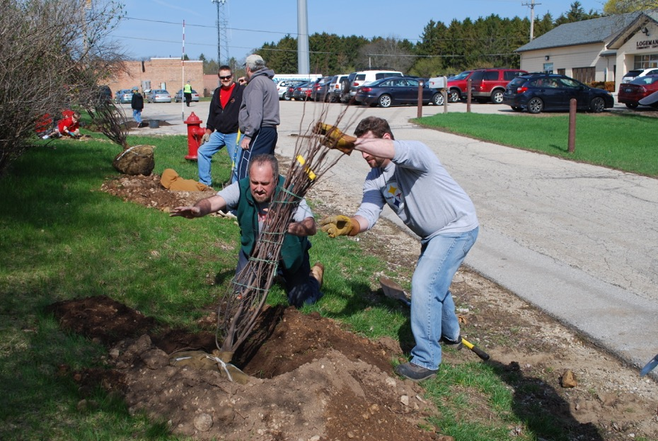 Rotarians Andy Moss and Chad Winterfield help to plant  Red Bud Trees tress in the Mequon Town Center. Learn more  here.