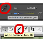 How to Correct White Balance in Post-Processing - www.mommatography.com
