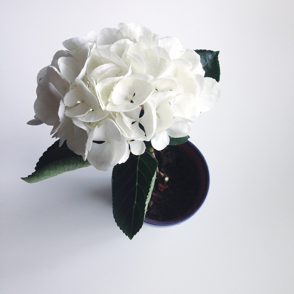 noodlenthread - flowers