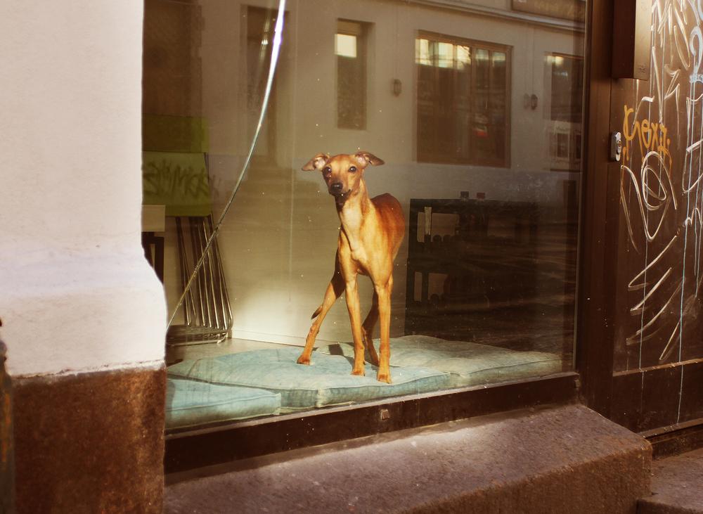 Hund_i_vindu liten.jpg