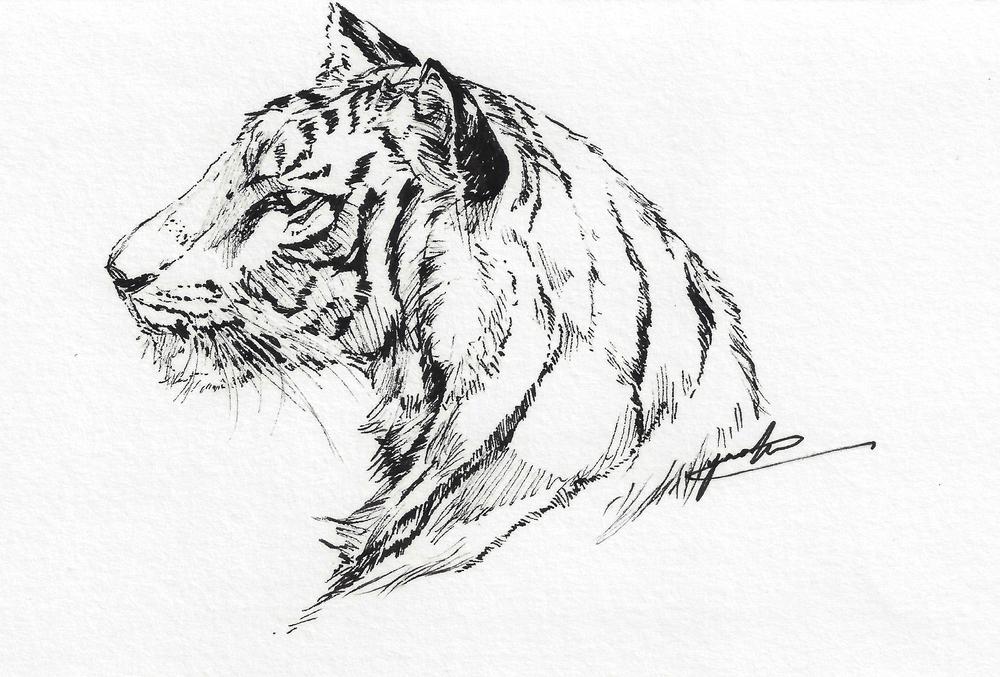 tiger_pen_600dpi.jpg
