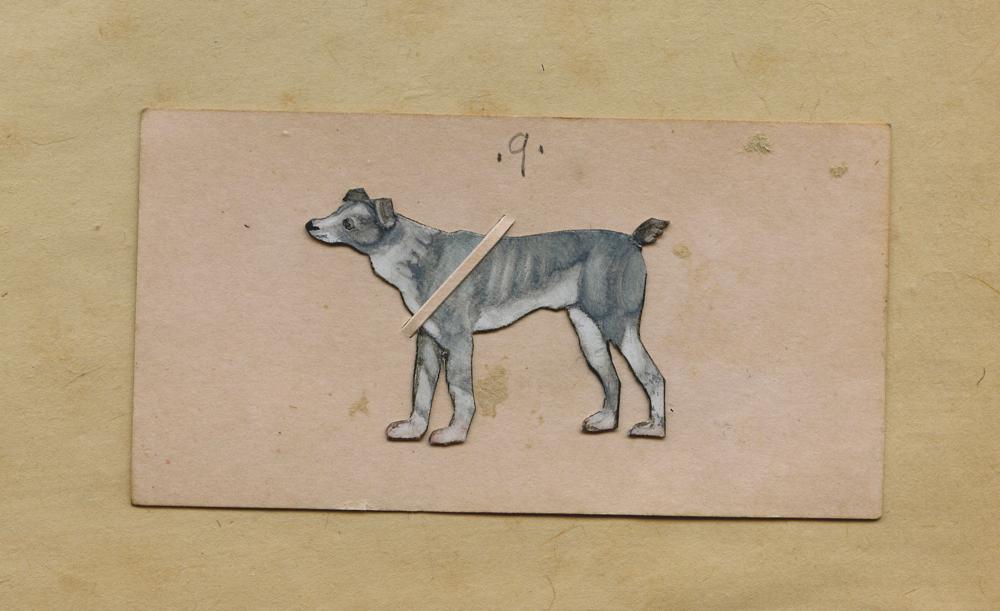 Tiny Grey Dog