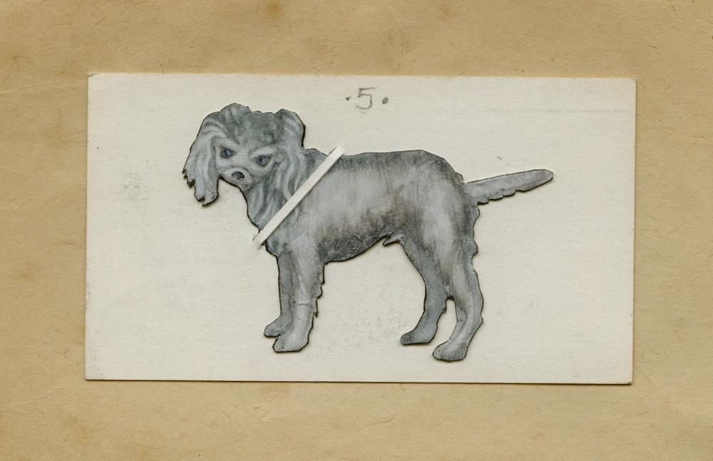Fluffy Ear Dog