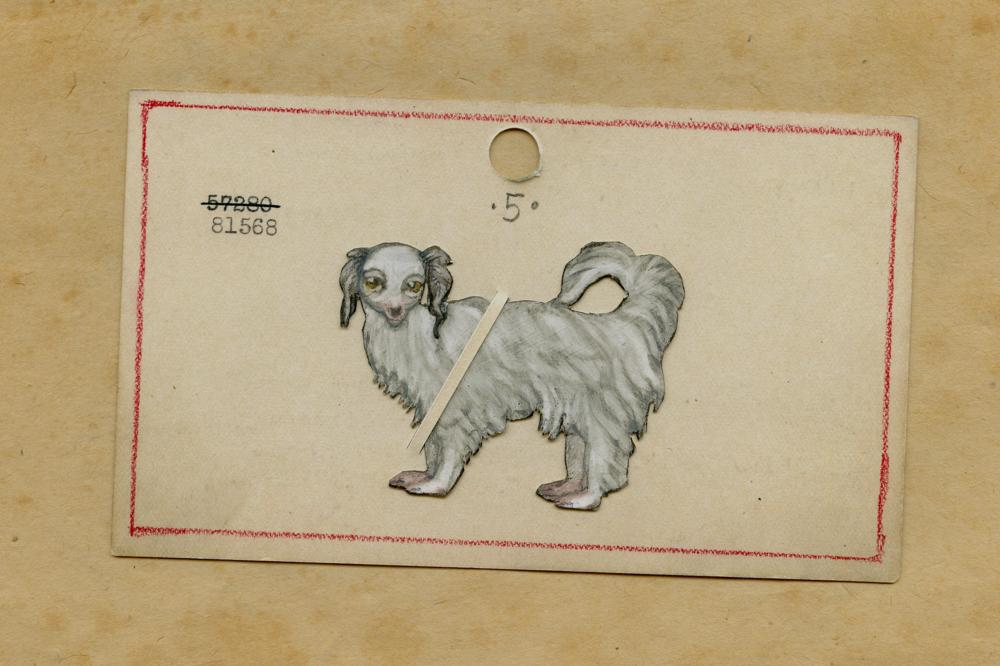 Pink Nose Dog