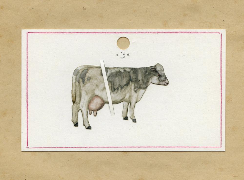 B/W Cow