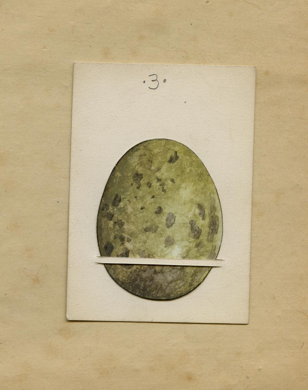 Ochre Egg