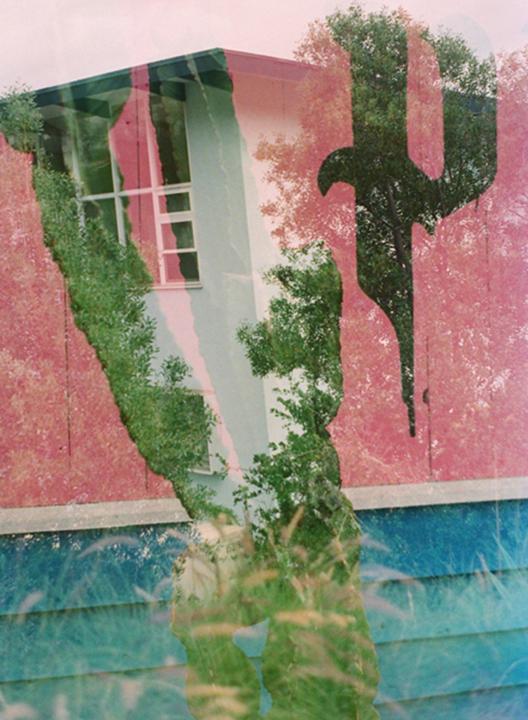 Rose, Cacti, Exposures.jpg
