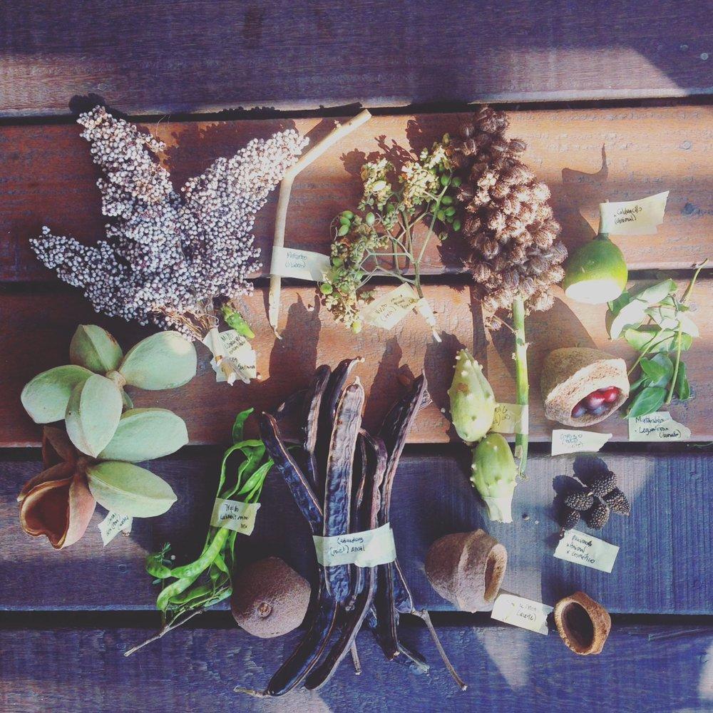 Frutos, semillas y cultivos de Bosque Seco Tropical .Tubará, Atlántico