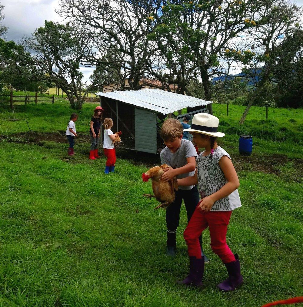 Planteamos programas educativos puntuales o como complemento de un curriculum existente, con el propósito de sentar las bases para aproximar a los estudiantes al origen de la comida con una visión interdisciplinaria, desde los principios básicos de la producción agrícola, hasta la experimentación en cocina.