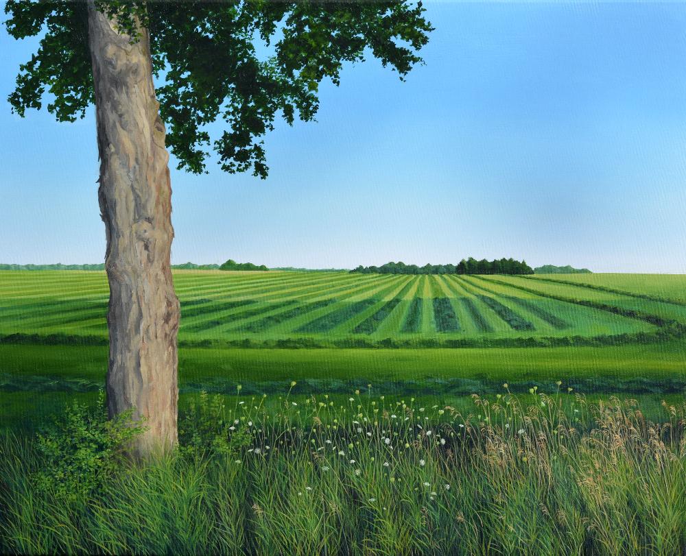 "Field Edge, 24x30"" Oil on Canvas"