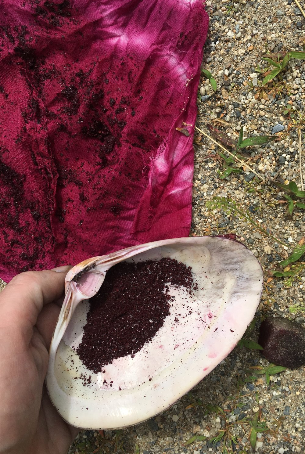 Grinding cochineal in a clamshell to make that vivid fuchsia