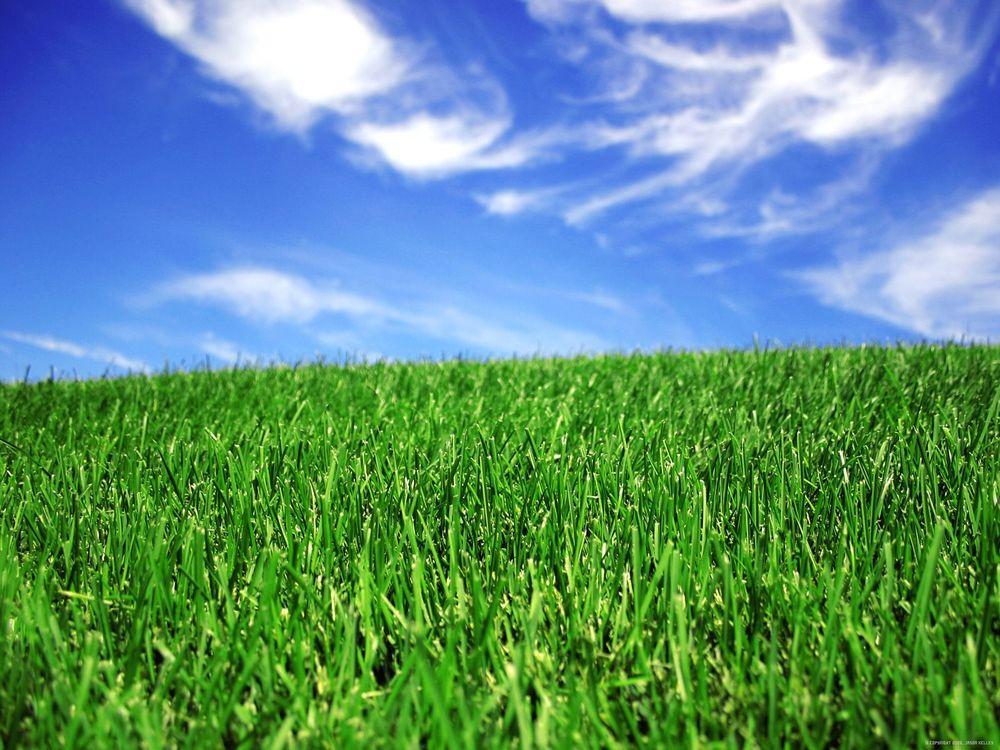 Lawn, Tree & Shrub Care