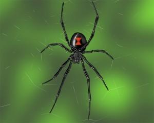 widow-spider-300x240.jpg