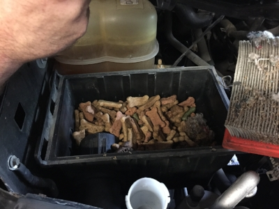 A rodent collected all the food he would ever need and stored it in this guy's airbox.