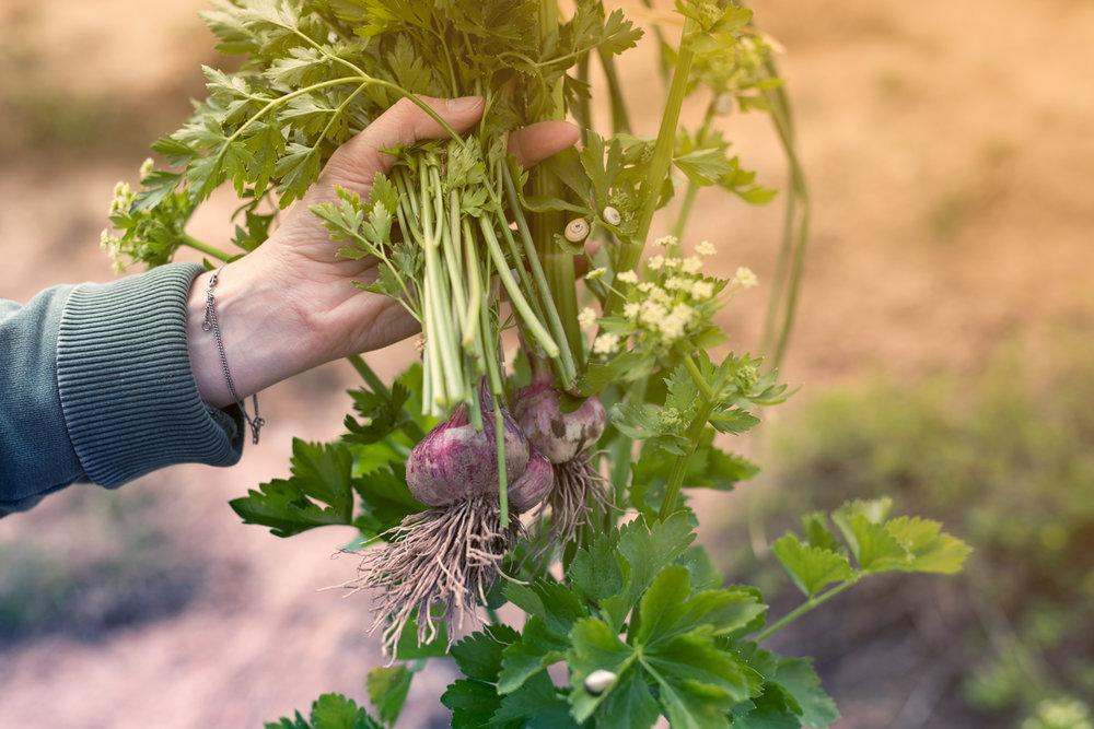 Grønnsaker i hånd.jpg