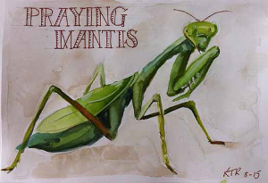 Praying mantis sketchbook page - final image.