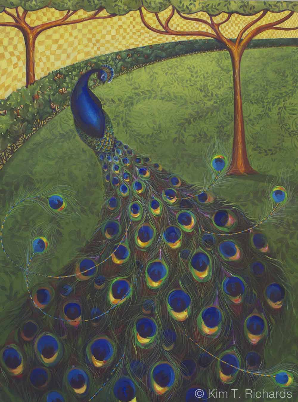 Peacock © Kim T. Richards 2014