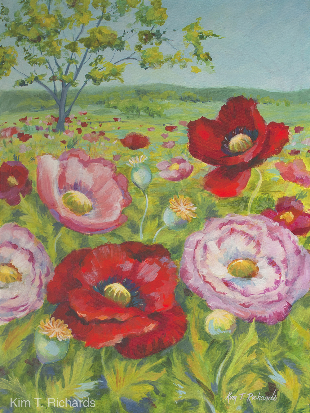 The Poppy Paintings Kim T Richards