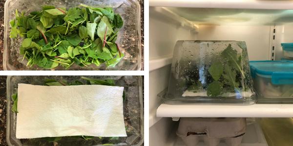 large bin lettuce storage.png