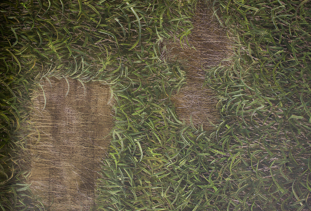 grass detail for chaco.jpg