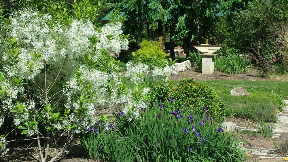 garden by david.jpg