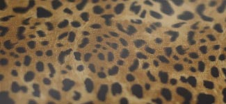 cheetah - bronze (H3AK01)