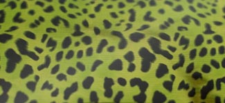 cheetah - green (NAAK01)