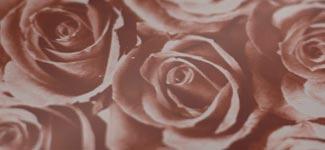 roses - maroon (RAAD01)