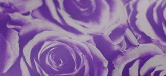 roses - purple (V2AD01)