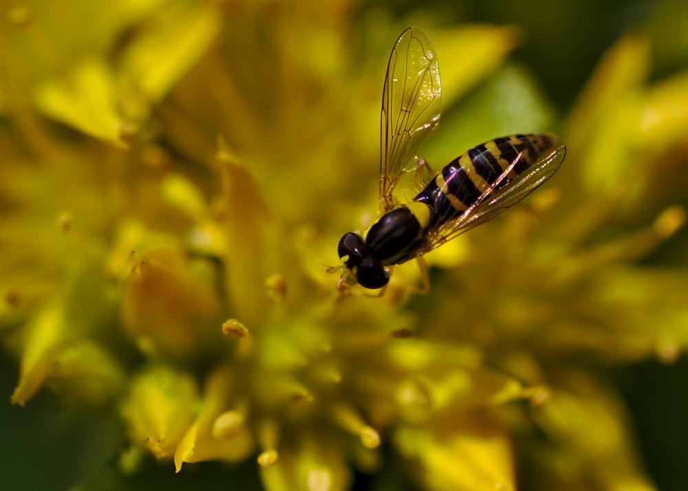 pollen hunt.jpg