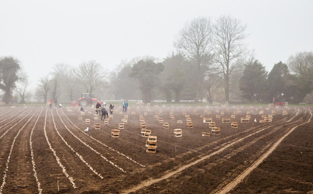 potato planting season.jpg