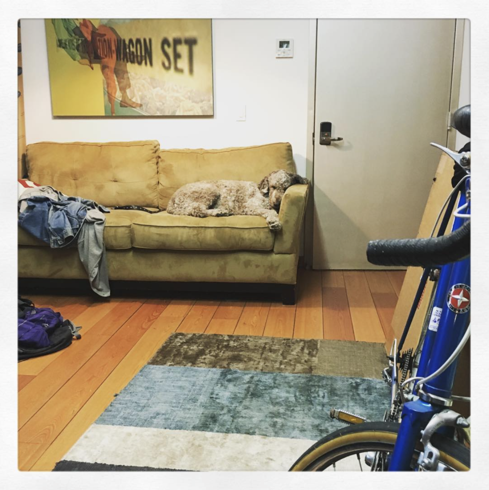OFFICE AND DOG - BROOKLYN